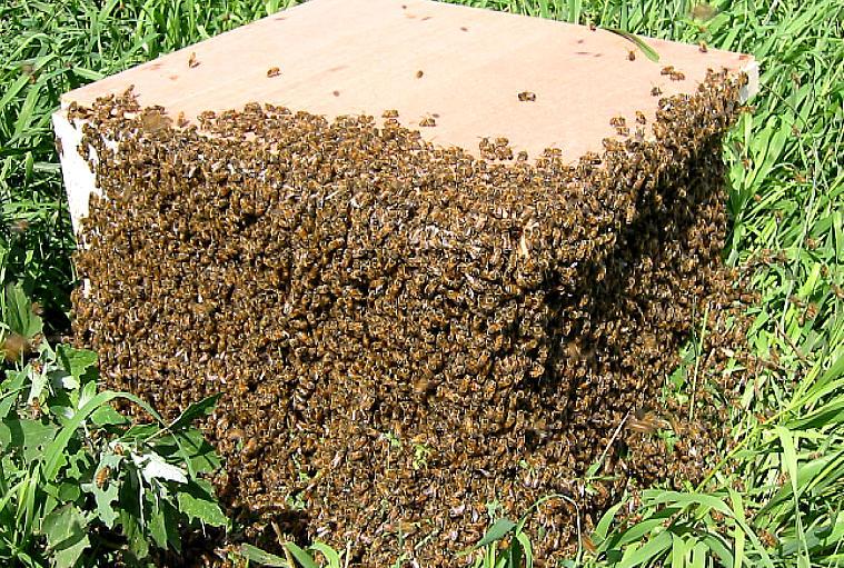 Что сделать чтобы пчелы не роились Своими руками - Как сделать самому 63